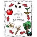 Pommes, Cycle et parties de la pomme