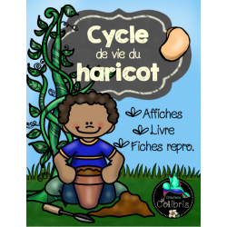 Printemps, Cycle du haricot, Ensemble