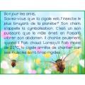Messages du matin - Mai / Insectes
