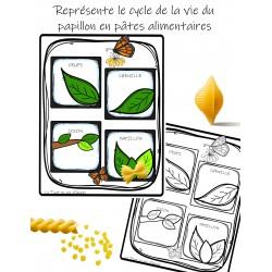 Cycle de la vie Pâtes Alimentaires