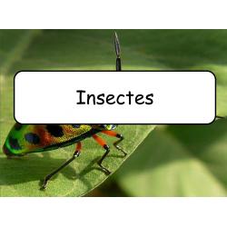 Mots étiquettes - Insectes