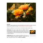 Français texte à partir image-Fleurs papillon