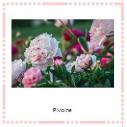 Cartes de nomenclature fleurs