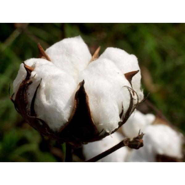 Le commerce équitable du coton en Inde