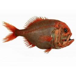 Écoresponsabilité, biodiversité et surpêche (PFEQ)