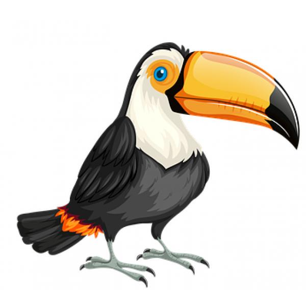 Identification d'oiseaux