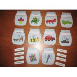 Bocaux (identification d'insectes)