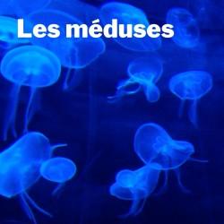 Capsule de relaxation - Les méduses