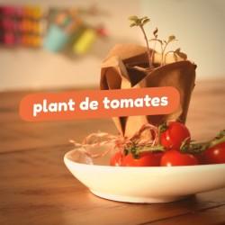 Lire et construire - Plant de tomates