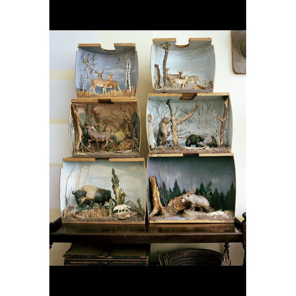 Arts dans une boîte : Animal