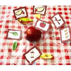 Les parties de la pomme
