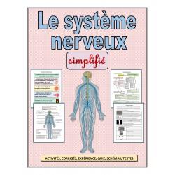 Le système nerveux simplifié