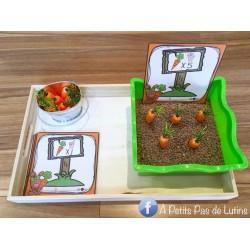 Plante des carottes avec Jannot le lapin