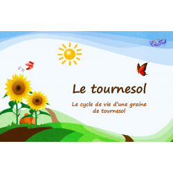 Le cycle de vie du Tournesol