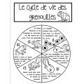 Roue du cycle de vie de la grenouille