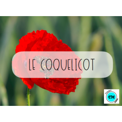 Le coquelicot