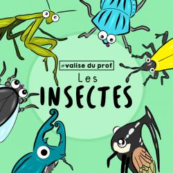 Cliparts insectes