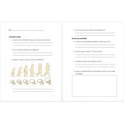 Questionnaire préhistoire