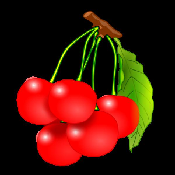FOOD - ACTIVITY - FRUIT