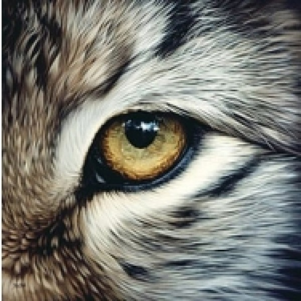 ŒIL DE LYNX - I SPY - TIMBRES ANIMALIERS