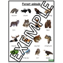 Forest animals vocabulary