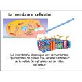 Les cellules, Vocabulaire & Concepts
