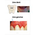 L'hygiène dentaire, Gr.2, 81 Fiches