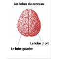 Les commotions cérébrales, Gr3 santé