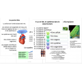 Les cellules, Science 8, 183 fiches