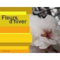 Fleurs d'hiver à la manière de Wu Changshuo