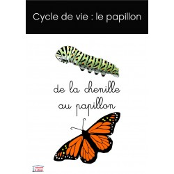 Cycle de vie du papillon