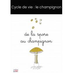 cycle de vie du champignon