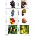 Cartes de nomenclature fruits