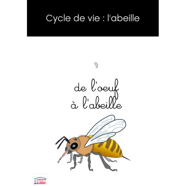 Cycle de vie de l'abeille - montessori