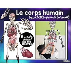 Le corps humain - squelette géant à assembler