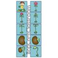 Le cycle de vie de la fleur - Memory
