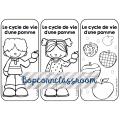 Le cycle de vie d´une pomme - Mini Lapbook