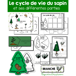 Le cycle de vie du sapin