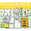 Le cycle de vie du tournesol