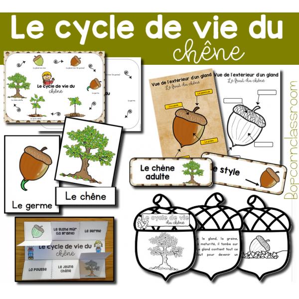 Le cycle de vie du chêne - Pack 1