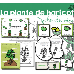 Plante de haricot - Cycle de vie - Pack 2