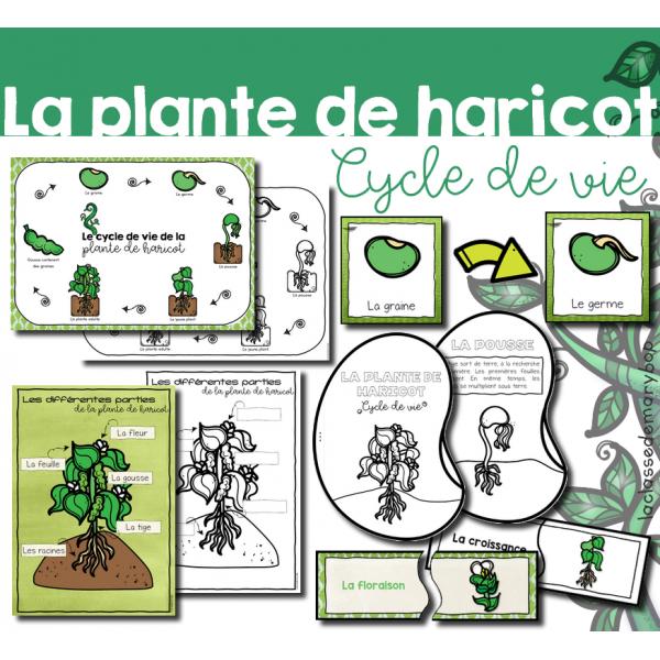 Plante de haricot - Cycle de vie - Pack 2