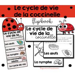 Le cycle de vie de la coccinelle - Flipbook