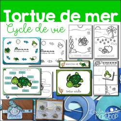 Cycle de vie de la tortue de mer