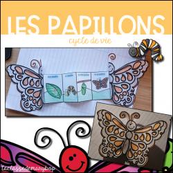 Papillon - Cycle de vie