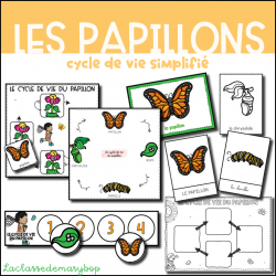 Cycle de vie du papillon - Version simplifiée