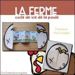 Cycle de vie de la poule - Accordéon