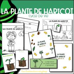 La plante de haricot - Cycle de vie - Pack 1