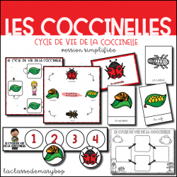 Cycle de vie de la coccinelle - Version simplifiée