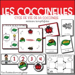 Cycle de vie de la coccinelle - Version simplifiée